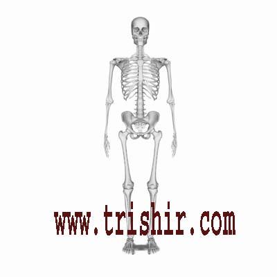 human skeleton buy online gifts & products, delhi (india), Skeleton